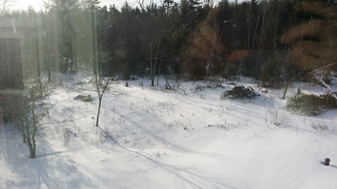 2015 New England Winter in East Freetown, MA